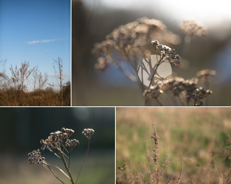 Fotograf Braunschweig Natur_ 1