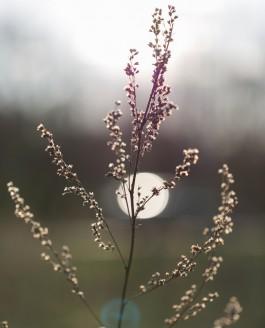 Fotografin Braunschweig – Natur
